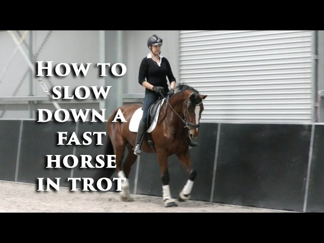 How to Slow Down the Fast Horse in Trot Dressage Mastery TV Ep 01