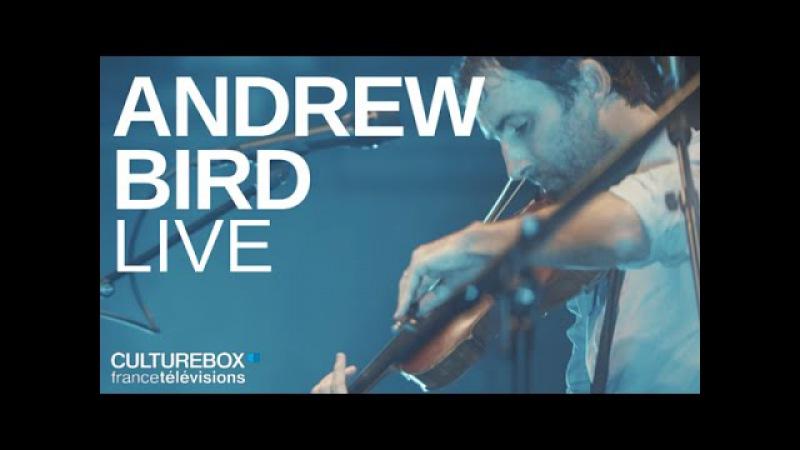 Andrew Bird (full concert) - Live @ festival Days Off
