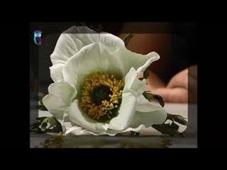Make the flower of the white poppy of foamiran (spongy rubber). Diy. Handmade