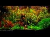 Dutch Aquariums / aquascapes compilation