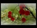 НВК Саха Юлиана Кривошапкина ©Toly@Элгээйи™2012 03