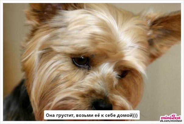 Фото №404336022 со страницы Діаны Софяк