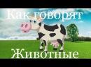 Развивающий мультик о животных на ферме. Как говорят разные животные. Стихи о жи ...