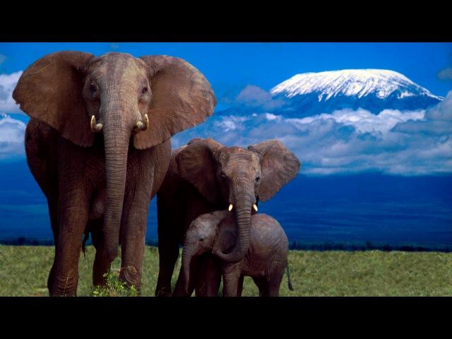 Жизнь Слонов BBC