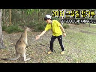 2미터 근육질 캥거루 잡던 중에 타잔이 나타났다 - 허팝 (2M muscular kangaroo)