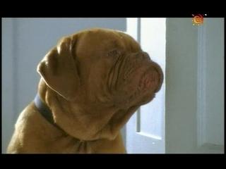 08 - Домик с собачкой (2002-2003)