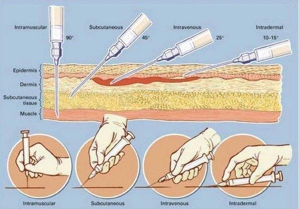 Схема как сделать укол внутримышечно собаке