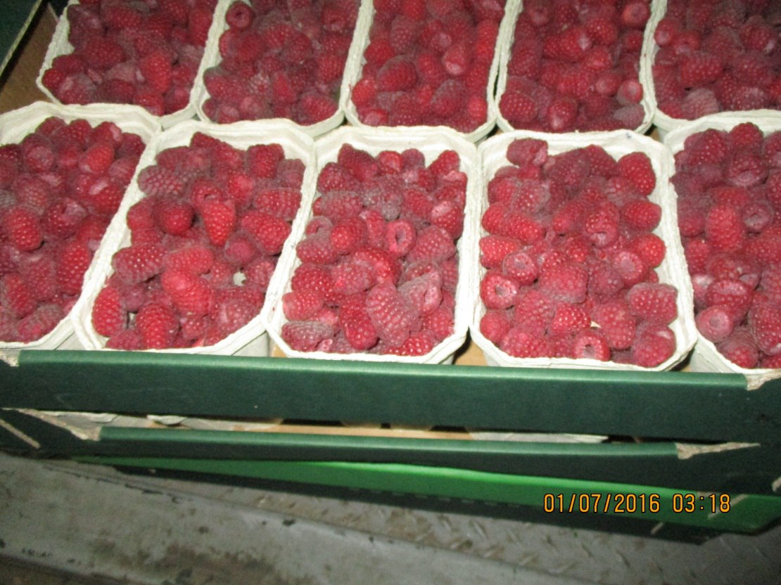 В Чернышевском уничтожили более 10 тонн санкционных овощей и фруктов