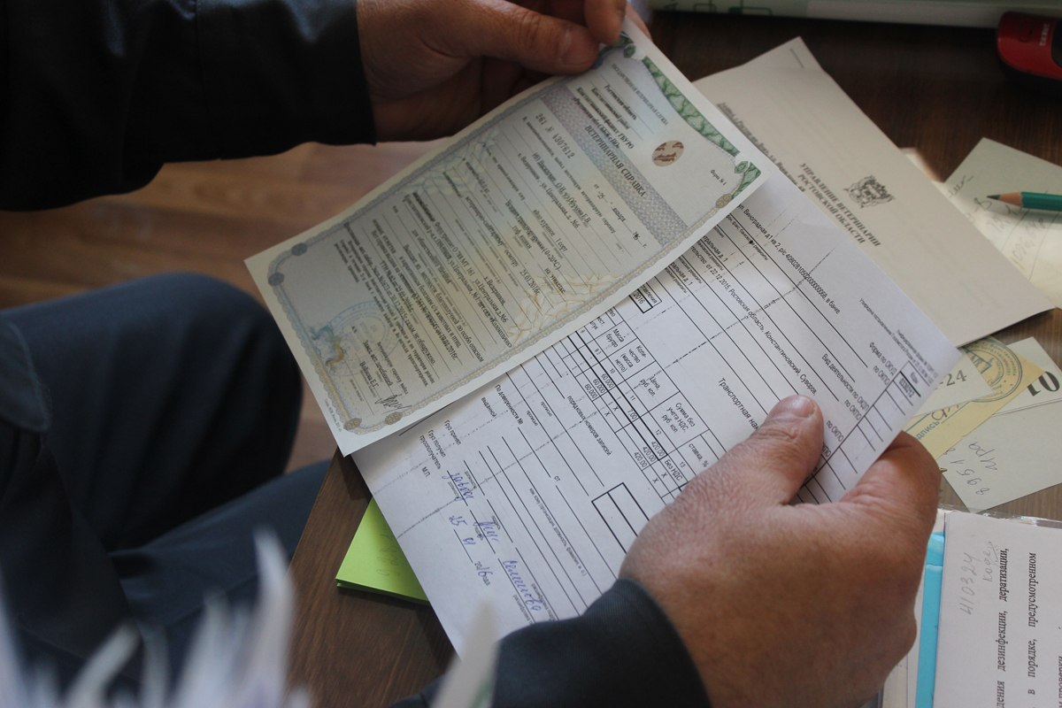 Ветеринарная инспекция Ростовской области проверила детский сад «Колокольчик»