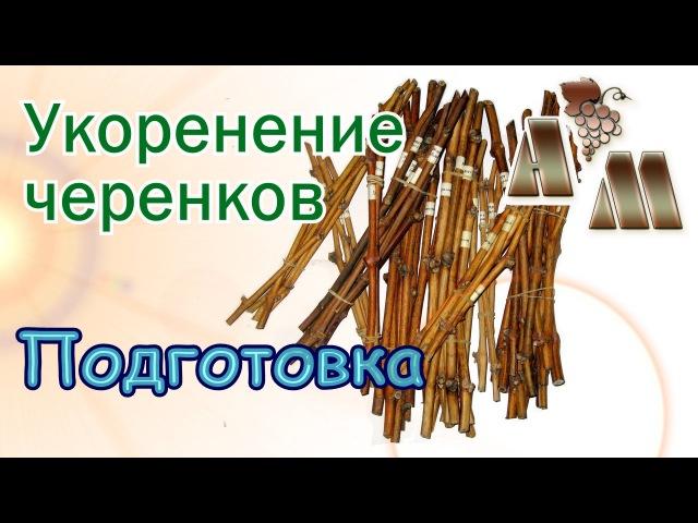🍇 Укоренение черенков винограда - 1. Подготовка черенков к укоренению