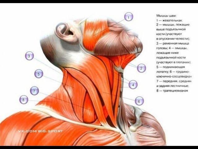 телесная терапия, снятие напряжения испуга и зажимов консультации