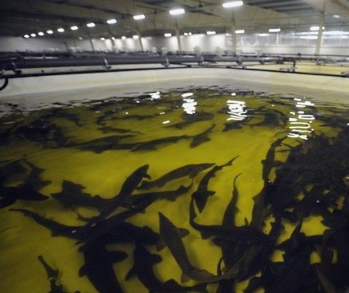 Бизнес план на рыбу бизнес план производство автобусов