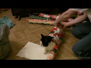 Как упаковать кота