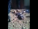 Zuva la zuvala Koupoussa jen pro silne povahy Afrika 18