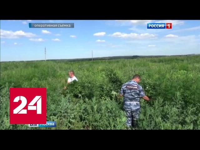 В Серебрянопрудском районе Подмосковья полицейские сожгли более 700 кг конопли