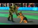 Служебные Собаки Дрессировка Собак Служебные Собаки Видео Команды для Собак