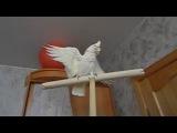 Случайно залетевший в квартиру попугай обматерил хозяев. С таким попугаем и не поспоришь!