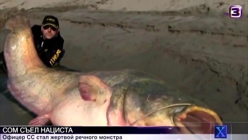 Сомик съел рыбку