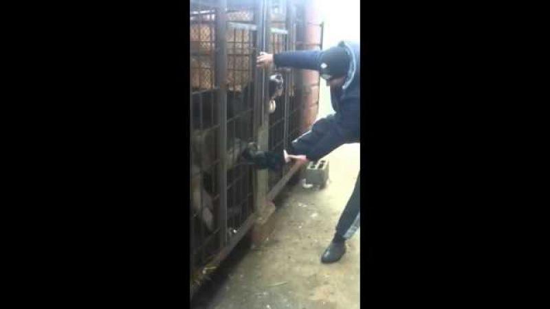 ДОИГРАЛСЯ парень ! злая собака в клетке это опасный зверь