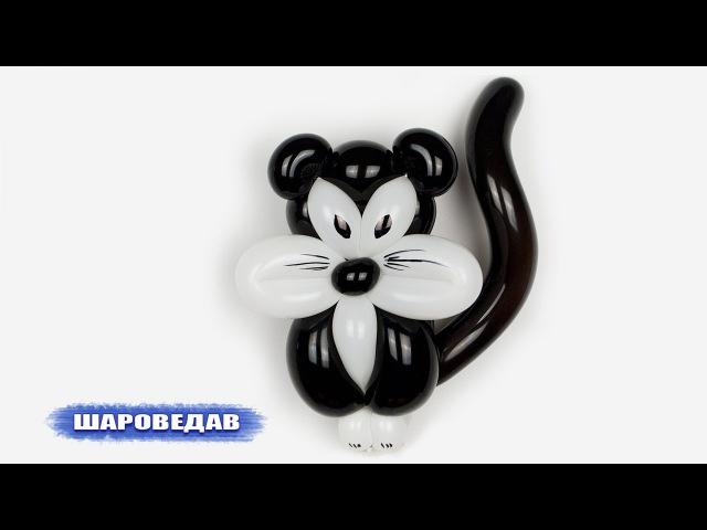 Чёрный кот Black cat