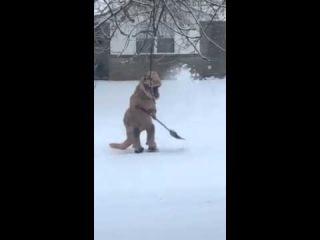 (VIRAL! Share Ahead!) Watch a cute Dinosaur, T-Rex, having Hard Time Shoveling Snow in Kentucky!