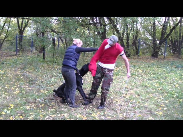 Дрессировка кане-корсо на защиту (2). ЗКС. www.dogclass.ru и stopvrag.ru