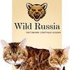 БЕНГАЛЬСКИЕ кошки, котята продажа / бенгал Крым