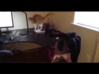 Ох уж эти смешные кошки.