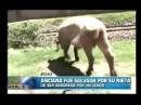 Anciana se salva de ser devorada por un cerdo