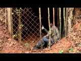 The Walking Dead Blackbird's Song - Lee DeWyze
