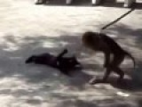 Лучшие приколы  Веселые игры обезьянки и кота