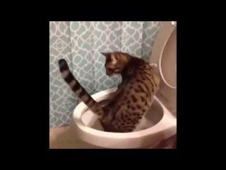 Смешные забавные животные коты собаки - самые прикольные видео