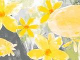 Футаж желтые цветочки