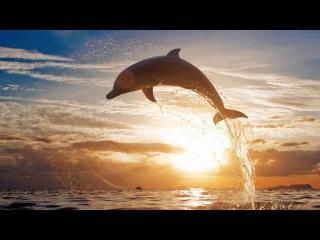 Звуки природы, шум моря, голоса дельфинов Целительная музыка Лучшая музыка для души Relax Music