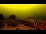 Окунь. Балансир в действии. Подводная камера на зимней рыбалке