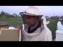 Подсадка роя на голую Вощину Пчеловодство Для Начинающих Ульи Для Пчел