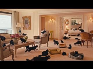 Черных кошек выслали за границу, чтобы испытать удачу