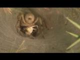 Tejidos Animales ¡Ahora en alta Calidad! (Documental Completo Part 1 ) Животные и насекомые ..