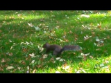 Botanical Gardens in Dublin with a squirrel