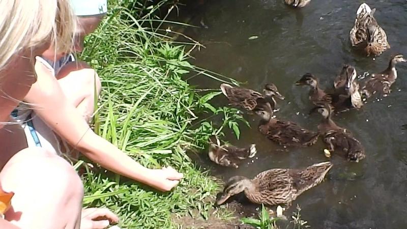 На пруду,кормим диких уток