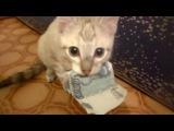 Не трогай мои деньги, человек! (6 sec)