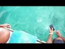 Дельфин достал упавший телефон