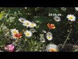 Живые цветы и красивая Итальянская музыка для любимой