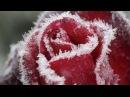 Ледяной цветок морозные узоры природа видео