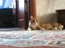 Кот ушел на задних лапах