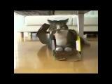 Видео про кошек разное и смешное