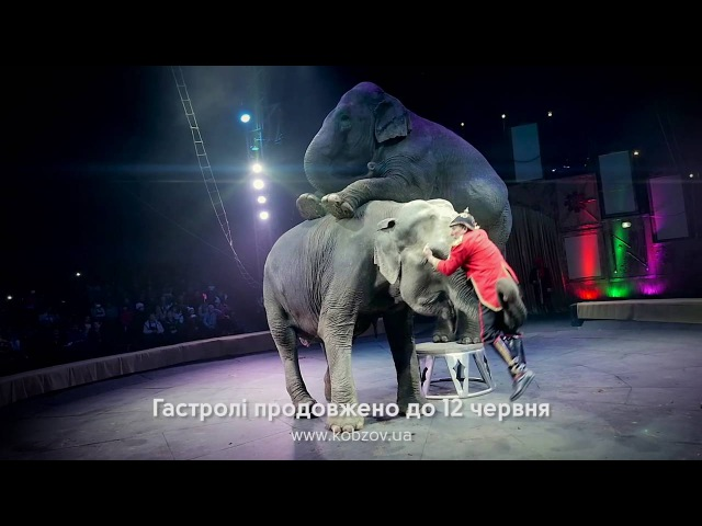 Цирк Кобзов з захоплюючим шоу WOOZU ТРЦ Екватор Полтава