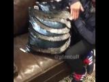"Видео on Instagram: ""Мне срочно нужна такая подушка ?? #ptencoff"""