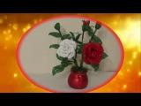 Белая и красная роза , часть 1