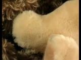 История мягкой игрушки- мишки Тедди и другие. Музеи мира